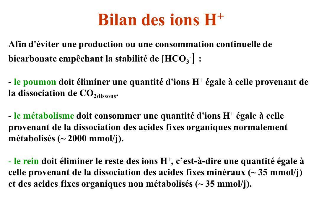 Bilan des ions H+ Afin d éviter une production ou une consommation continuelle de bicarbonate empêchant la stabilité de [HCO3-] :